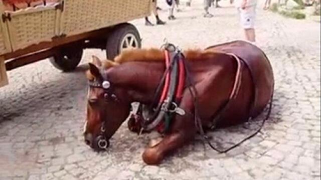 Koń padł z przemęczenia?   Sprawdzą to śledczy