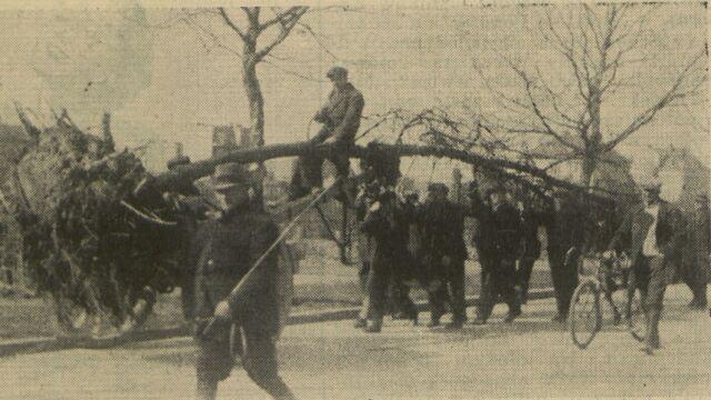 Tak Poznań przesadzał i przesadza drzewa