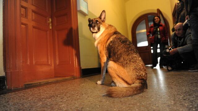 Proces o prawa psa. Wilczyca została za drzwiami