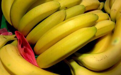 Zagrożone plantacje bananów w Kolumbii