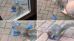 Ojciec obdarował wiewiórki, by uszczęśliwić  córkę. Internauci zachwyceni