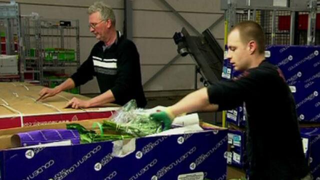W Holandii pracuje już 200 tys. Polaków