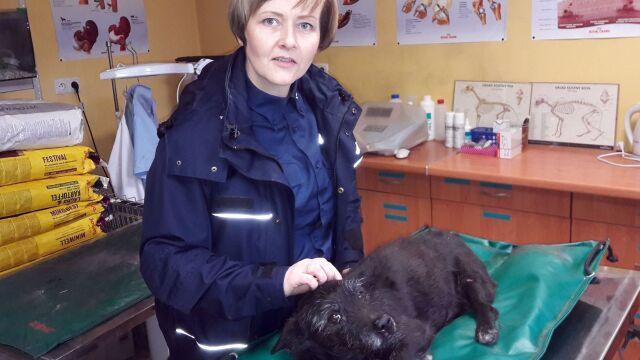 Policjantka pomogła potrąconemu psu