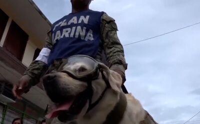 Legendarny pies-ratownik przechodzi na emeryturę