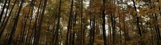 Zaatakował w lesie 60-latka. Policja szuka nożownika