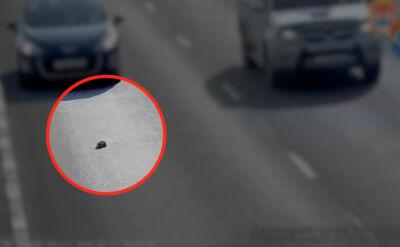 Mały kotek wypadł na autostradę. Uratował go kierowca