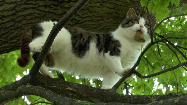 Kot z dziupli na drzewie pokonał rywali. Najciekawsze wideo tygodnia w tvn24.pl