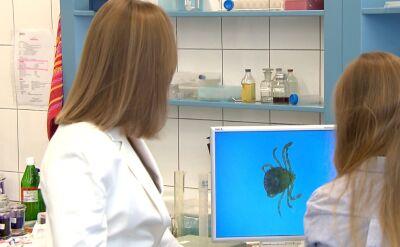 Naukowcy z Uniwersytetu Warszawskiego odkryli nowy gatunek kleszcza w Polsce