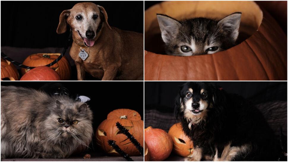 """Zapozowały do zdjęć, by polecić się do adopcji. """"Fantastyczne zwierzaki, pełne dobrych emocji"""""""