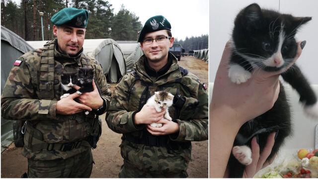 Żołnierze pojechali na poligon, znaleźli cztery małe kotki.
