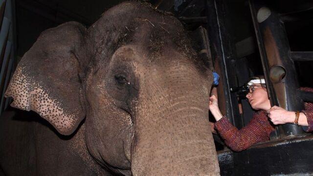 Słonica założyła kontakty