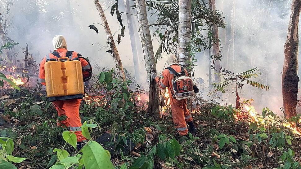 Znalezione obrazy dla zapytania pożary w amazonii obrazy