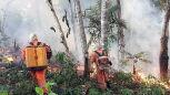 Poary trawią puszczę amazońską