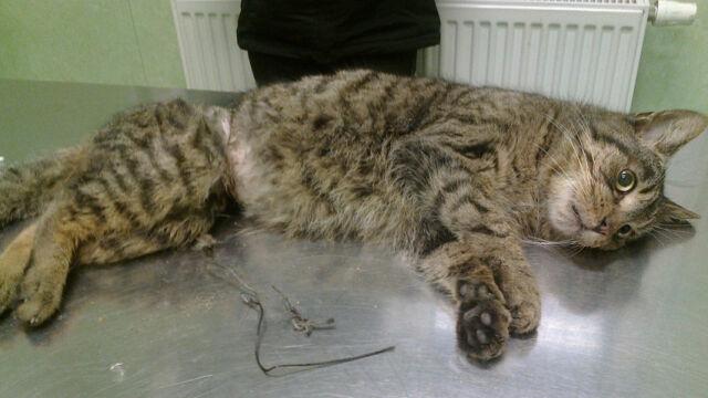 Biegał po osiedlu oplątany drutem. Animalsi uratowali kota