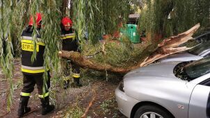 Severe weather in Poland. Downed trees, damaged cars and houses