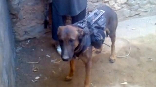 """Talibowie wzięli do niewoli... psa. To """"szpieg"""" i """"pułkownik"""""""