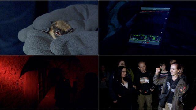 W nocy spotkali się w forcie. Uzbrojeni w detektory ultradźwiękowe i latarki tropili nietoperze