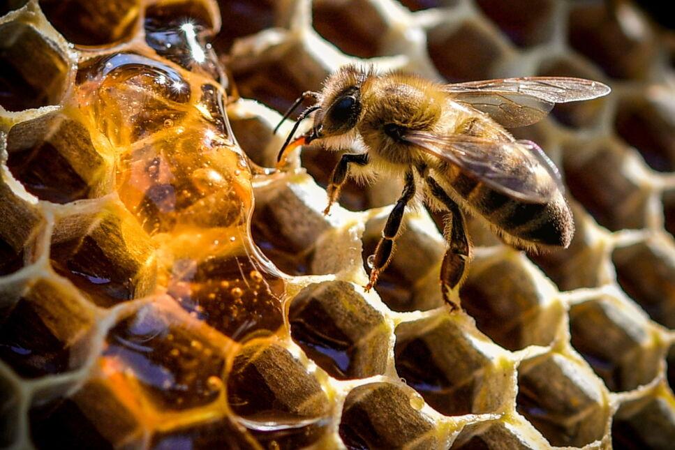 Muzeum Pszczelarstwa w Duisburgu, Niemcy