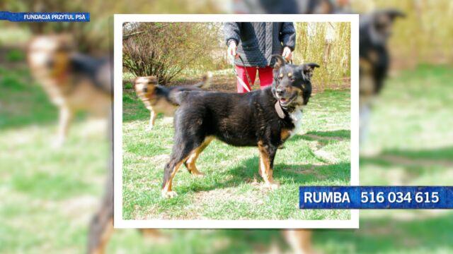 Rumba szuka domu