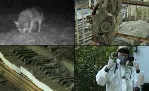 """Czarnobylska """"strefa wykluczenia"""" zatrzymana w kadrze"""