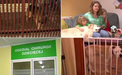 Dzieci zaatakowane przez psy. Bohaterska postawa dziewięciolatki