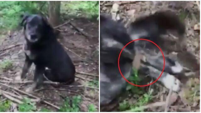 Związał psu łapy i przywiązał go do drzewa w lesie. Ma za to trafić do więzienia