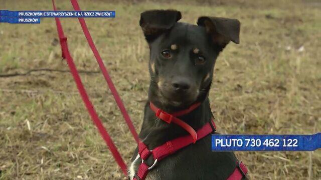 Pluto - miłość i nadzieja