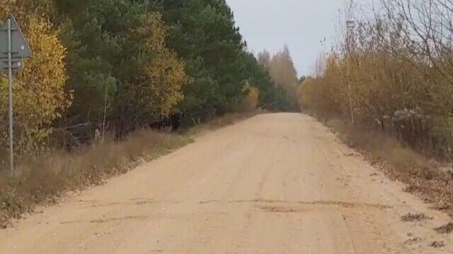 Żubry wyłaniają się z lasu pod Krynkami