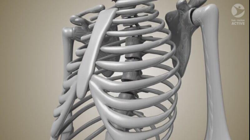 Jak jest zbudowany i jak działa ludzki kręgosłup