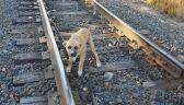 Znalazł szczeniaka przywiązanego do torów