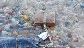 Zagadkowa sprawa martwych fok z Oksywia