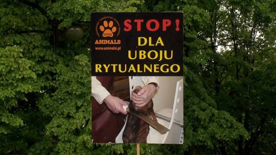 Czy Sejm zalegalizuje ubój rytualny?