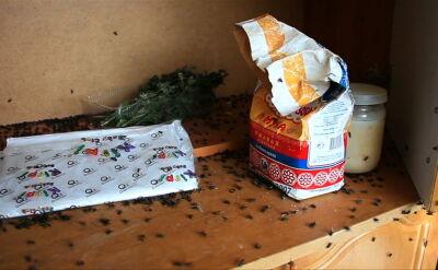 """Prawdziwa inwazja much w wiosce na Uralu. """"Nie mam już sił wymiatać ich z domu"""""""