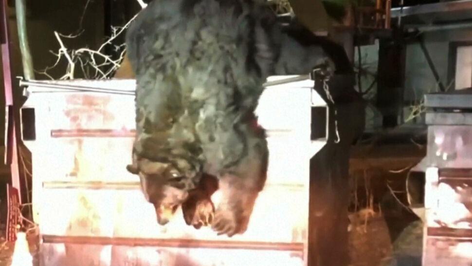 Niedźwiedź utknął w kontenerze na śmieci. Na pomoc ruszyli policjanci