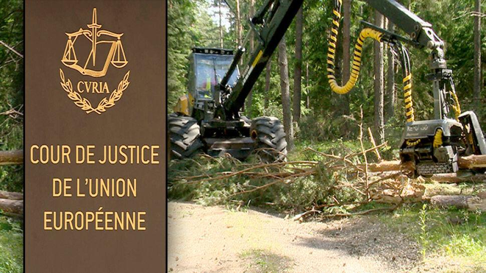 Unijny Trybunał: 100 tysięcy euro kary dziennie, jeśli Polska nie zaprzestanie wycinki