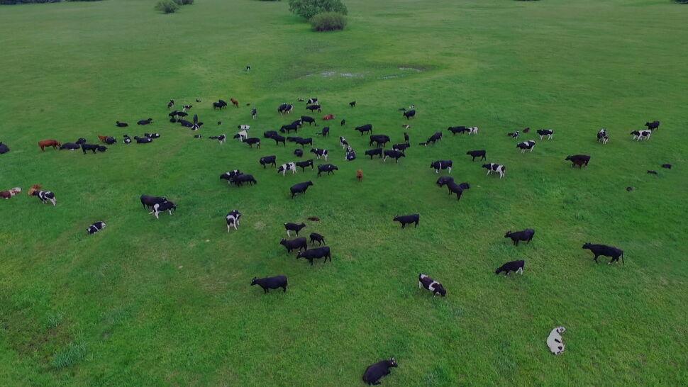 Aktywiści wciąż pilnują krów z Ciecierzyc