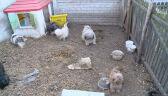 Skrajnie zaniedbane, trzymane w klatkach dla królików. Zlikwidowano pseudohodowlę psów