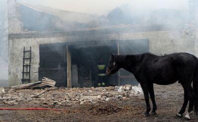 18.02.2016 | Pożar w klubie jeździeckim koło Szczecinka. Strażacy zdołali uratować tylko część zwierząt
