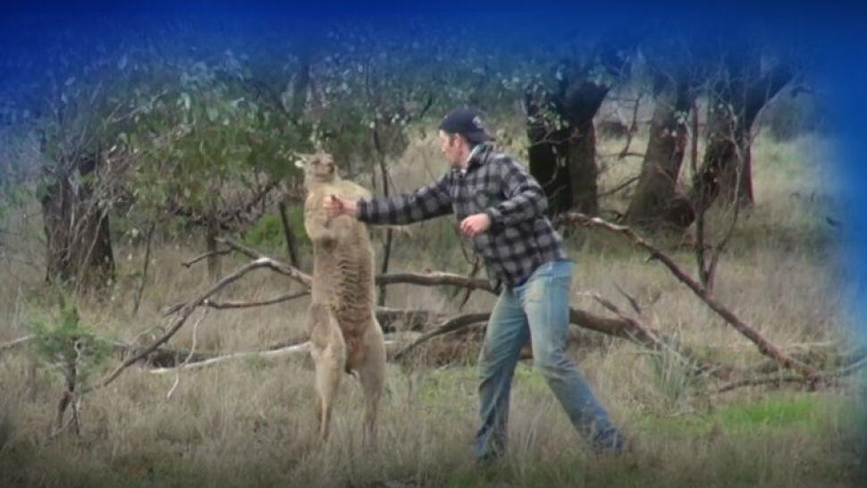 Człowiek kontra kangur. Torbacz dostał w pysk za zaatakowanie psa
