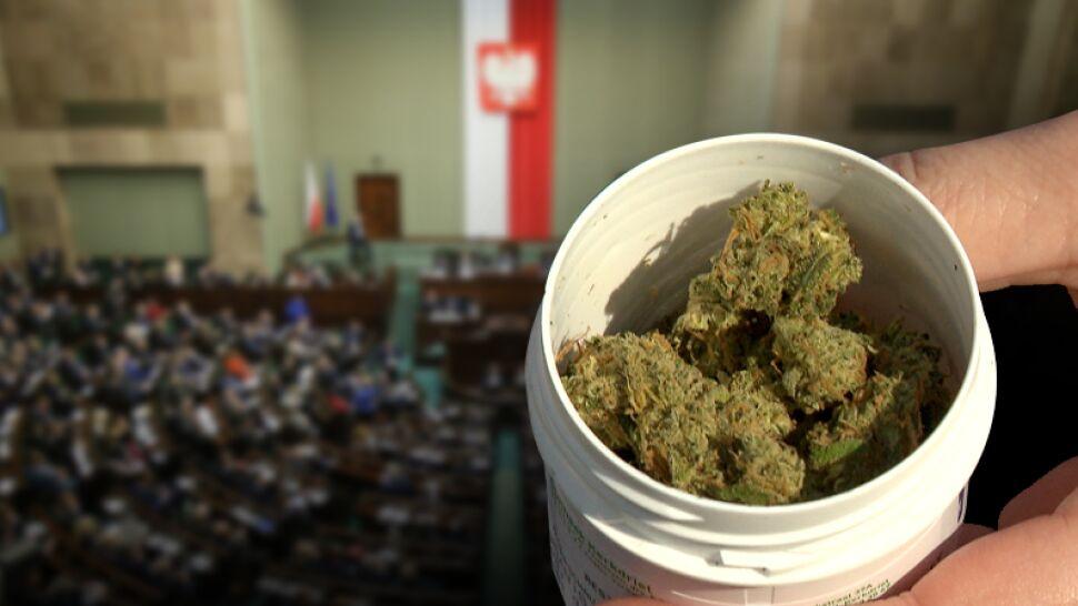 Kiedy medyczna marihuana będzie legalna? Prace w Sejmie trwają