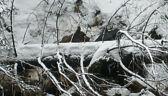 Młoda niedźwiedzica utknęła w potoku. Pomogli ratownicy