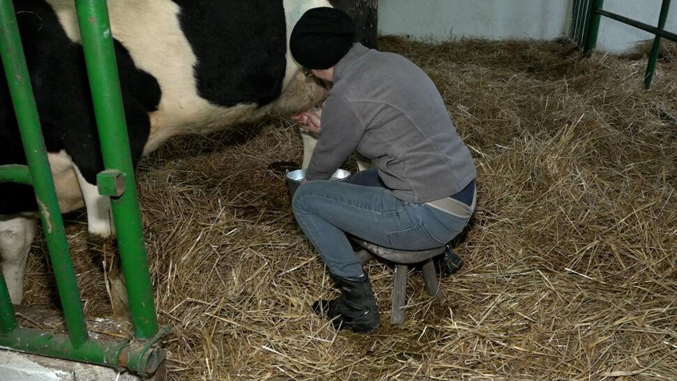 Kurs dojenia krowy, porady od kota, nagrobek. Osobliwe aukcje dla WOŚP