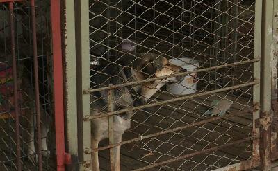 """Od lat pomagają zwierzętom, teraz sami potrzebują pomocy. """"Sytuacja jest tragiczna"""""""
