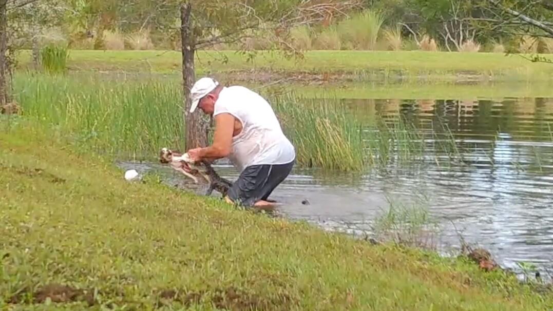 Wyciągnął szczeniaczka z paszczy aligatora. Zobacz nagranie