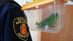 Papuga z nóżką w gipsie wleciała do mieszkania