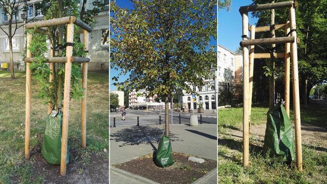 Tajemnicze worki przy drzewach
