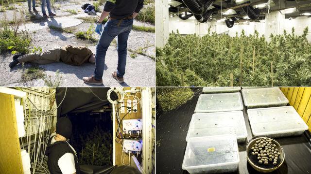 W dawnej siedzibie firmy urządzili uprawę marihuany