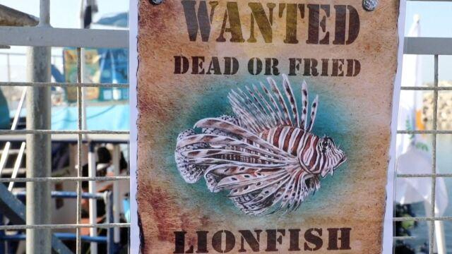 """""""Poszukiwana: martwa albo smażona"""". Chcą zwalczyć ryby grillowaniem"""