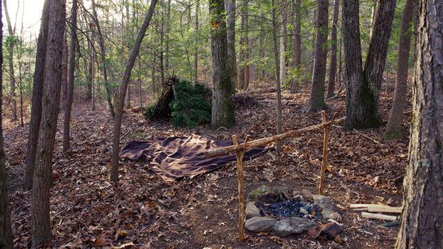 Bushcraft i survival łatwiejsze w polskich lasach.