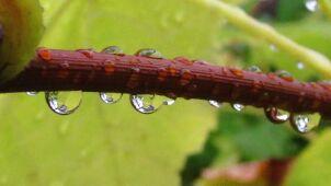 Prognoza pogody na jutro: przyjemne ochłodzenie i przelotne opady